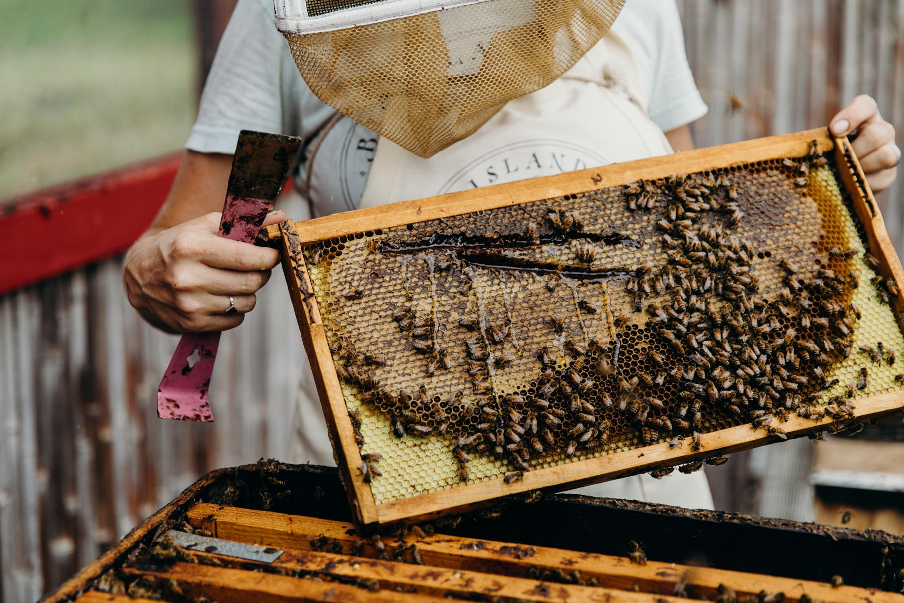 Local beekeeper shows honeycomb