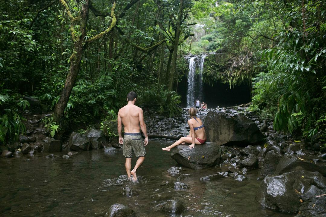 Maui Rainforest