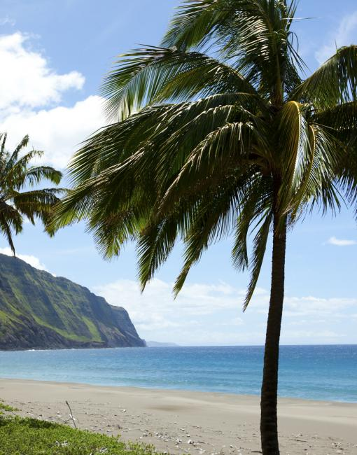 View of palm trees on a Molokai Beach
