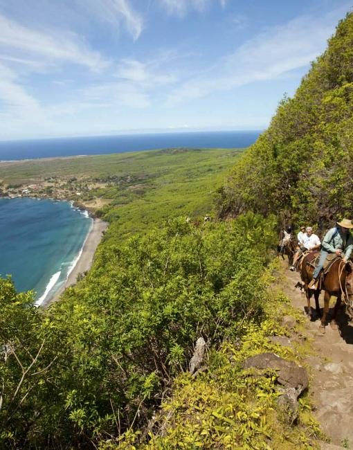 People riding mules along the cliff trail to Kalaupapa on Molokai
