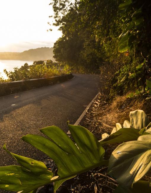 Scenic drive on Maui
