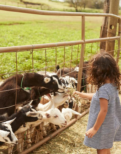 Farms & Markets