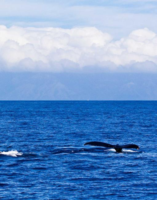 Two whale tails are visible rising out of the ocean water