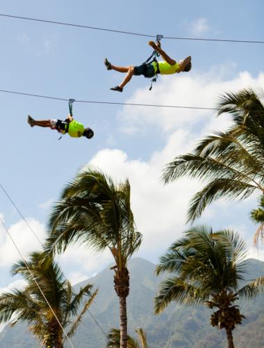 Two zipliners soar above the tops of palm trees on the island of Maui.