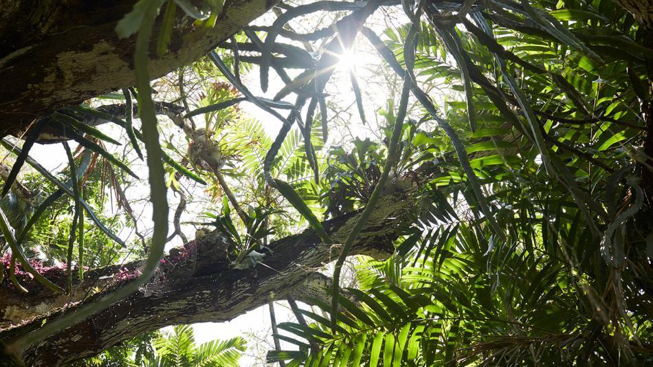 Video: Kauai South Shore