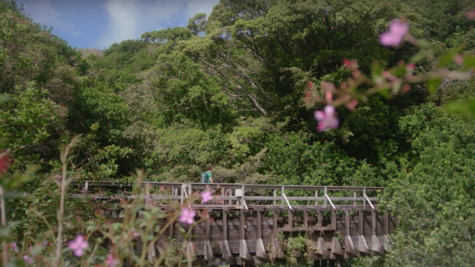 Island of Hawaii Travel Tips: Land Safety video
