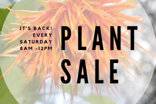 plant sale waimea valley