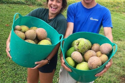 Volunteers after a breadfruit harvest