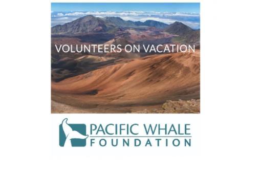 Volunteer with Malama Honokowai & Pacific Whale Foundation