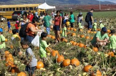 Families in search for the perfect pumpkin at Aloun Farms 17th Annual Pumpkin Festival