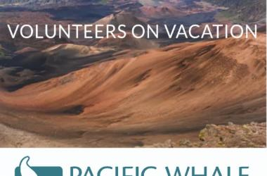 Become a Citizen Scientist with Pacific Whale Foundation