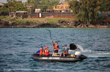 Ed Lyman works with a trained and NOAA-authorized response team to free an entangled humpback whale off Maui.