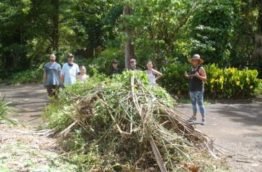 cleared piles of invasives