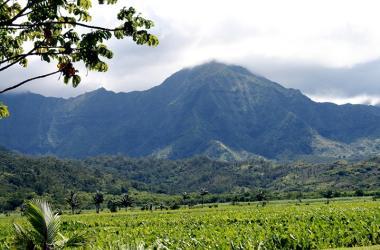 Hanalei Mountains and Taro