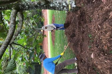 Keeping our trees healthy by adding fresh compost material