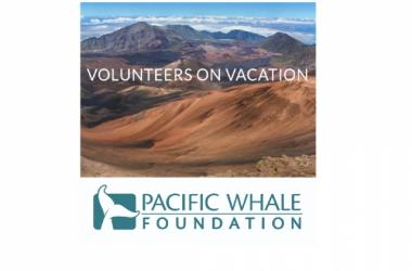 Volunteer with Hoaloha Aina & Pacific Whale Foundation