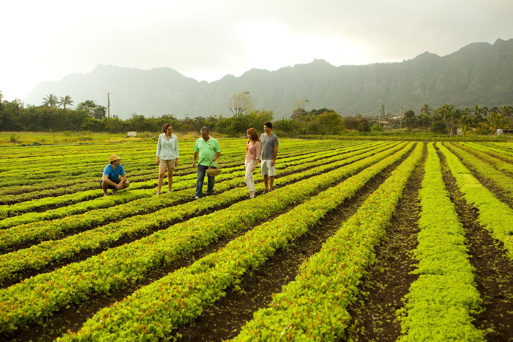 Farm Tours and Agricultural Tours in Hawaii | Go Hawaii
