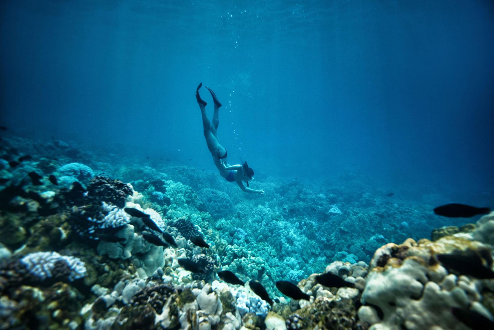 snorkeling and scuba on hawaii island go hawaii