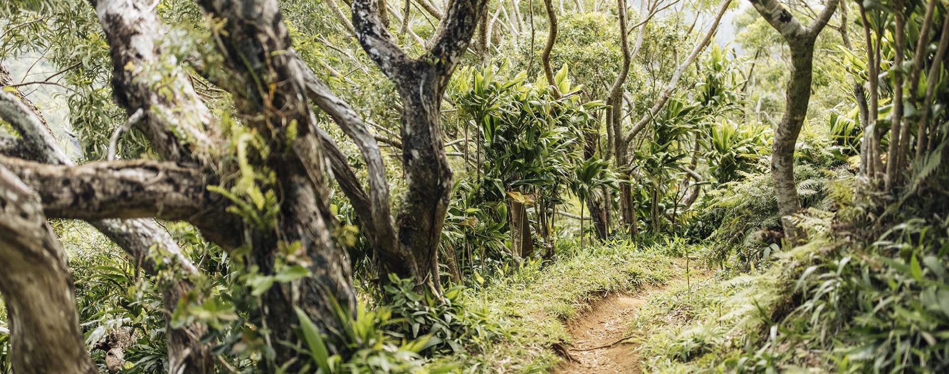 Reforestation on the Hawaiian Islands
