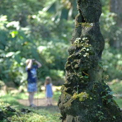 Lava Tree State Park