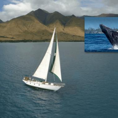 Island Star - Private Sailing Charters Maui
