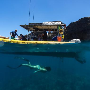 Ultimate Whale Watch & Snorkel Lanai Snorkeling Trip