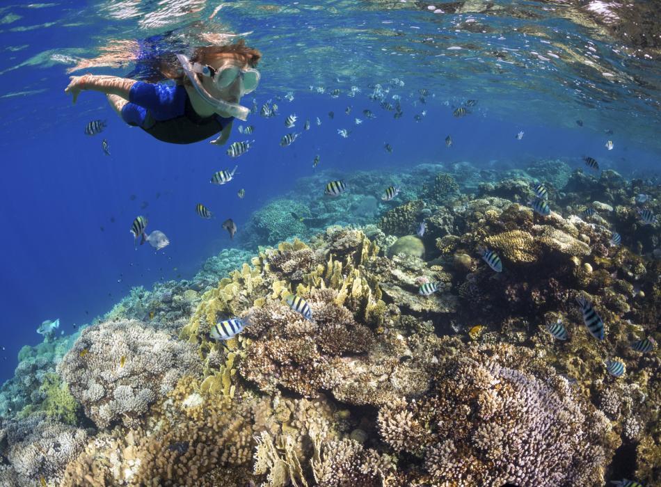 Snorkeling on the Big Island