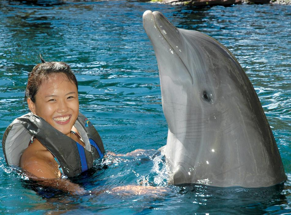 Dolphinquest