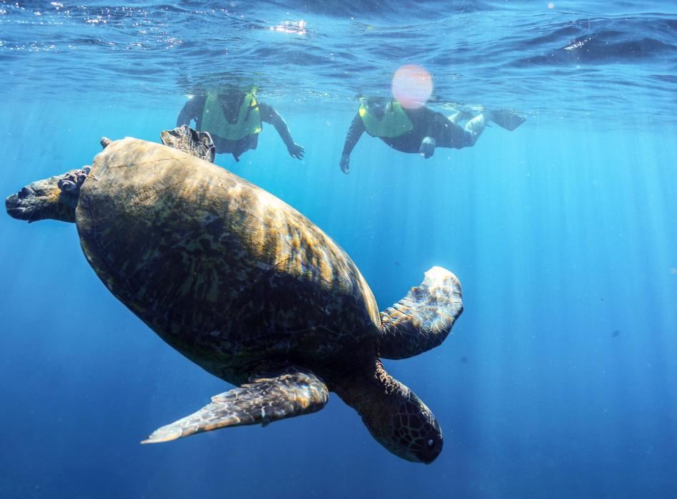 Explore the ocean, snorkel with fish, turtles, and more!