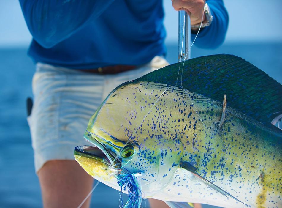 mahimahi fishing