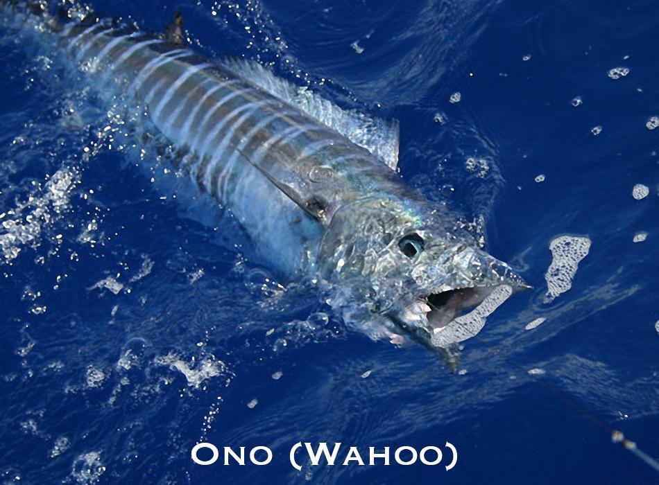 Ono (wahoo)