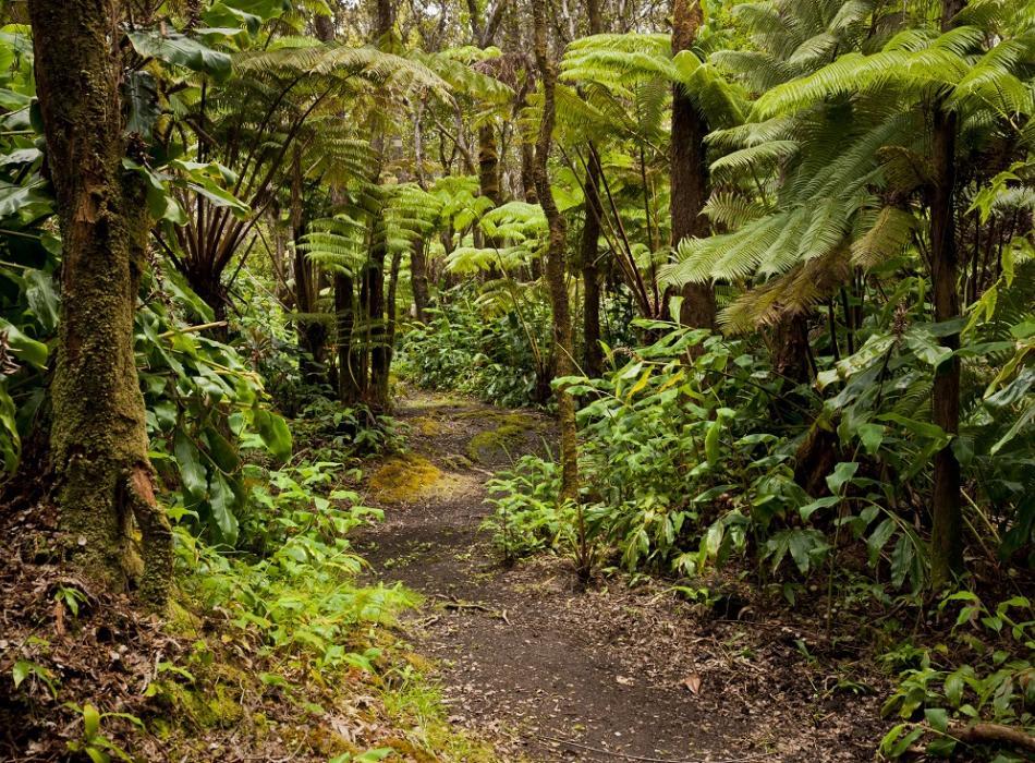 Hale 'Ohu Rainforest Walk
