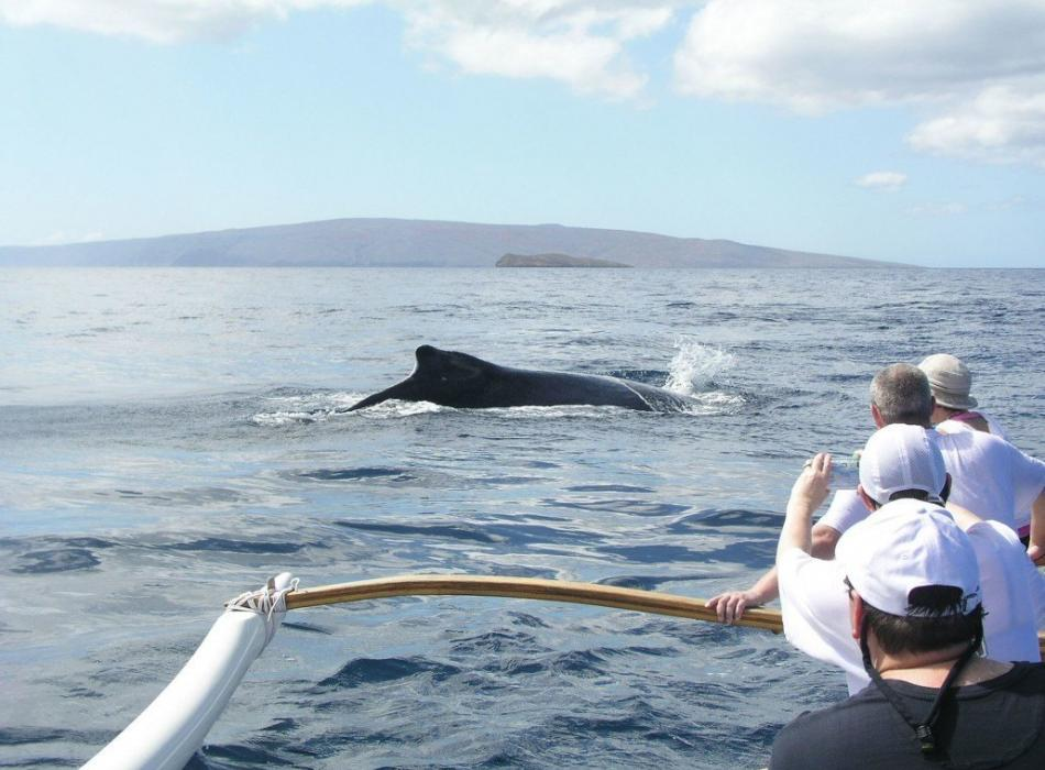 Whale Watch Canoe Tour