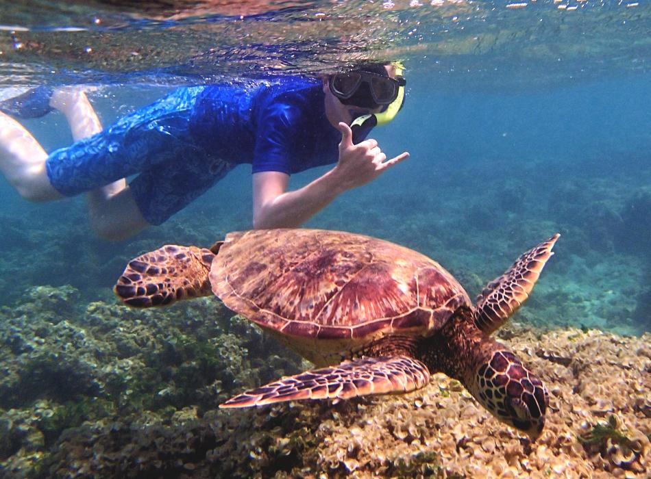 Snorkeling with the Honu