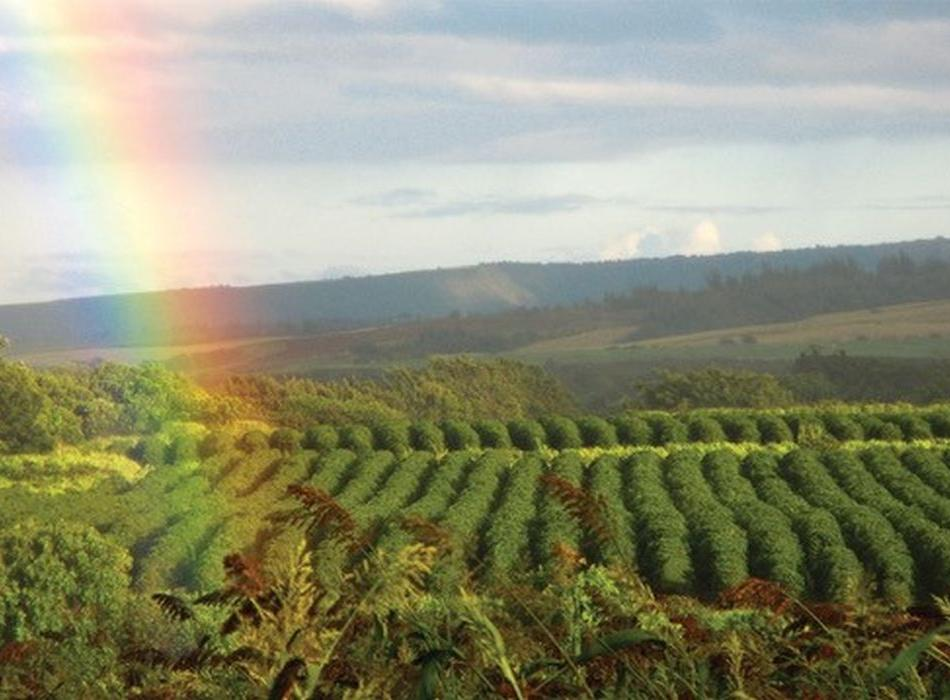 Field with Rainbow