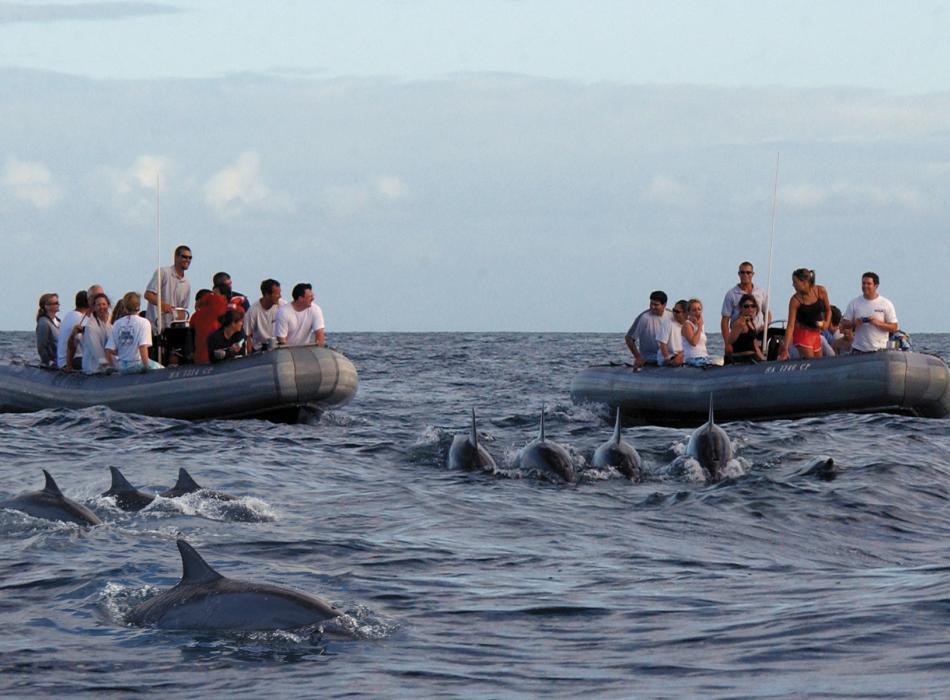 Dolphin Guarantee