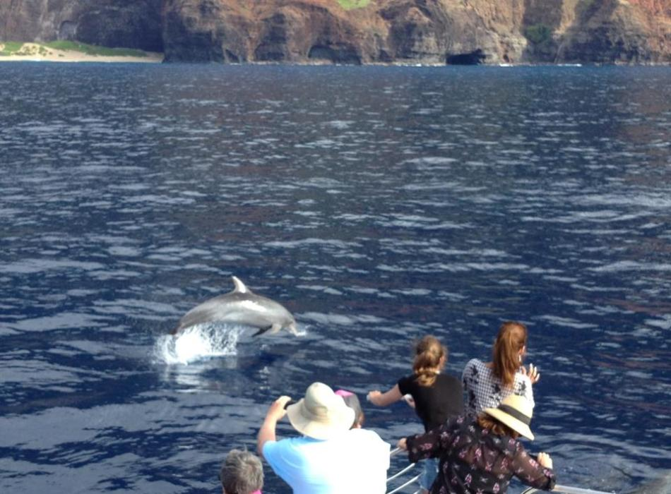 Playful Dolphins on NaPali