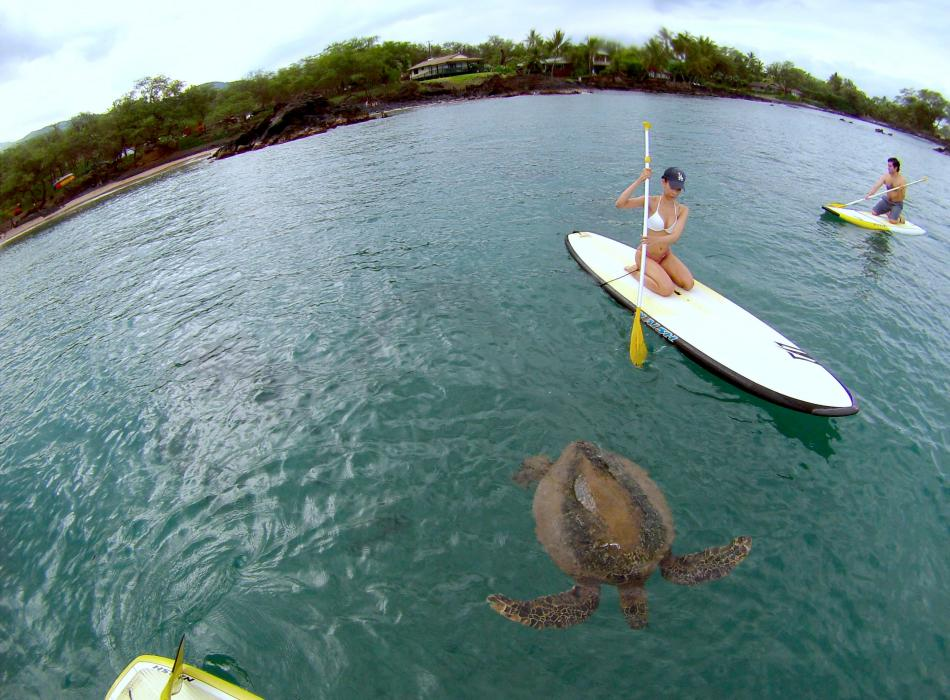 SUP and Turtle Spotting