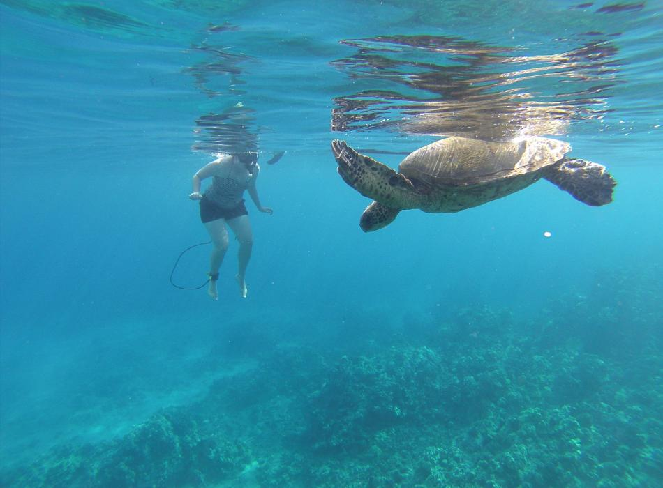 Paddling and Snorkeling with Green Sea Turtles