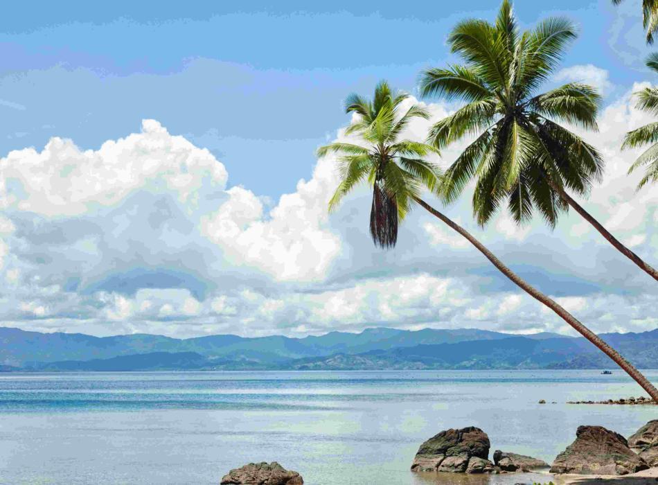Mauna Lani - Palm Tree & Beach Pic
