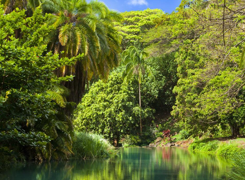 Mcbryde allerton gardens national tropical botanical - National tropical botanical garden ...