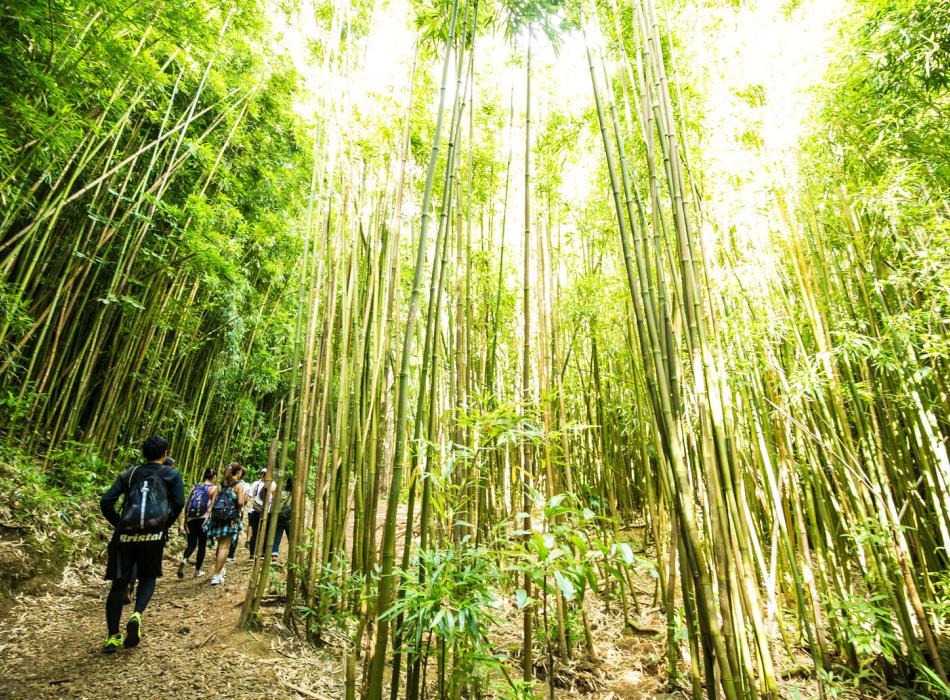 Enjoy an invigorating hike through lush bamboo groves