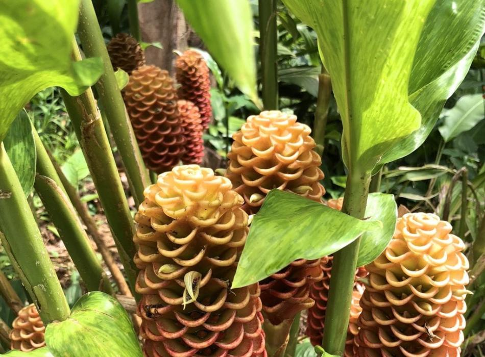 Discover rare and otherworldly plants in the rainforest