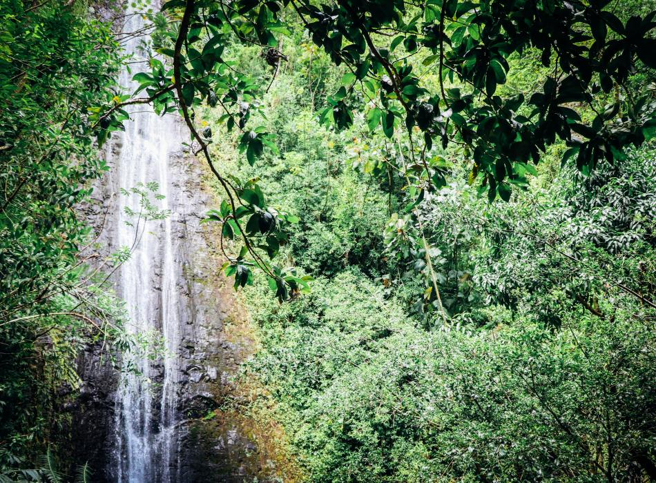 Join Nature and You on a hike through lush forests to Manoa Falls!