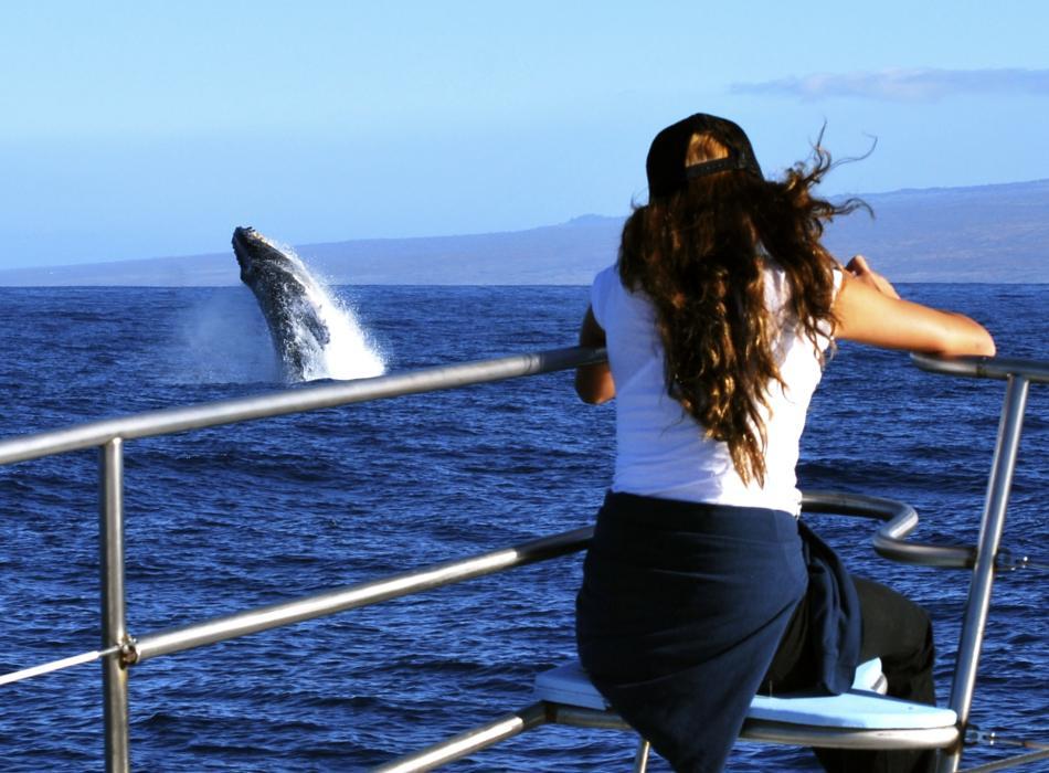 Award Winning Whale Watch Cruises