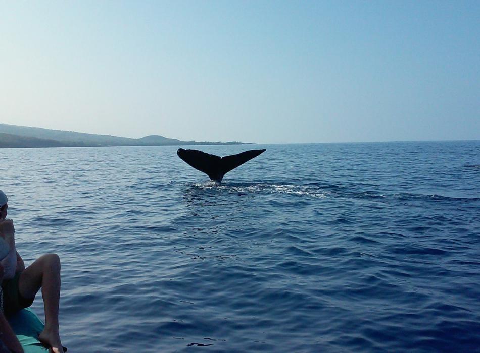 Humpback Whale Tale