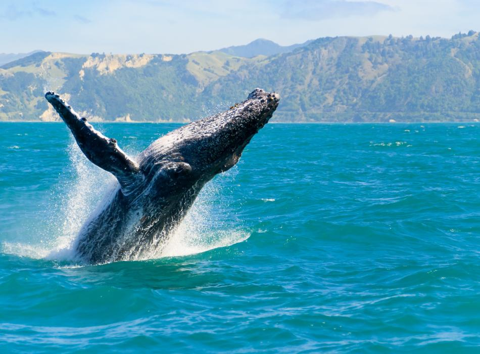 Go on a whale watch - December through March