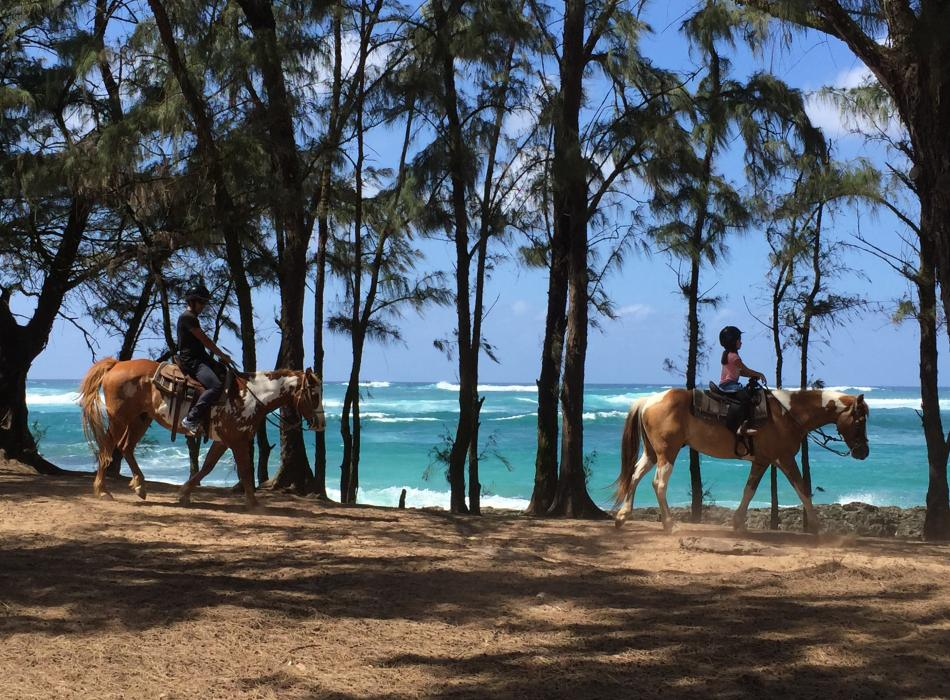 Horseback riding anyone?