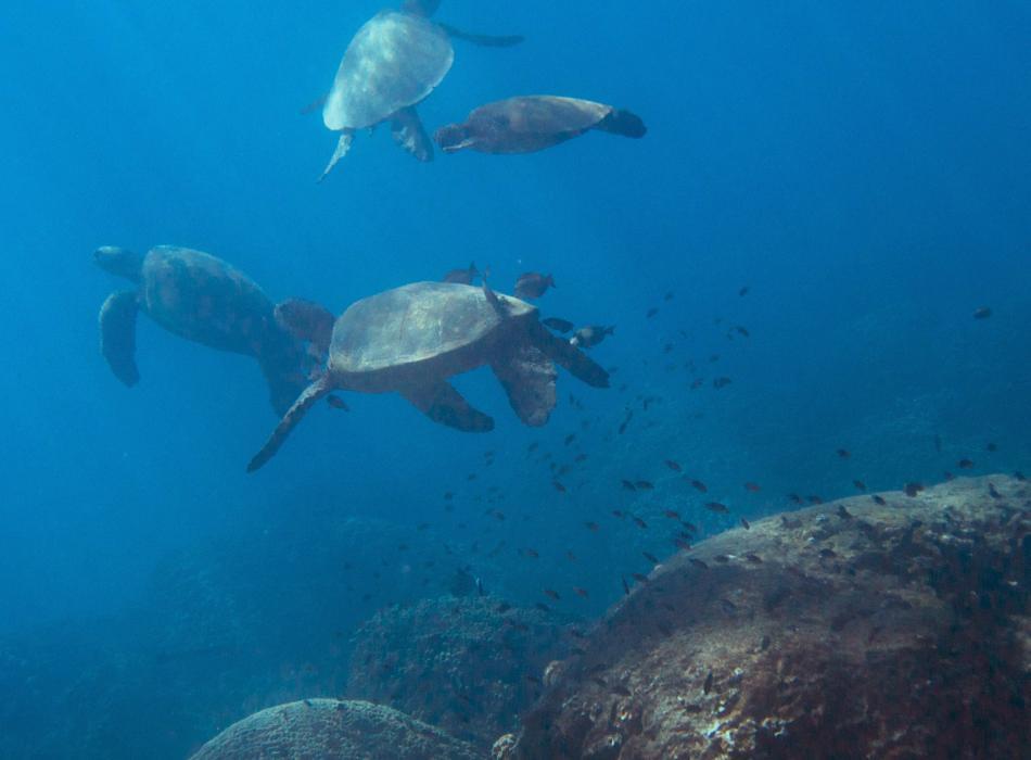 Turtle reef snorkel