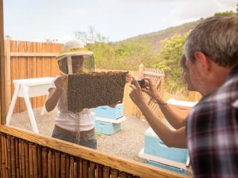 Beekeeping Farm Tour